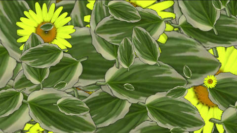 yellow daisy flower & leaves,spring scene Stock Video Footage