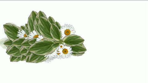 daisy flower & leaves,spring scene Animation
