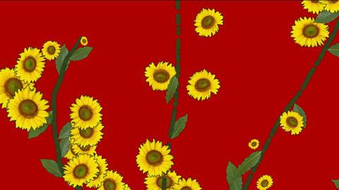 daisy flower & leaves,spring scene Stock Video Footage