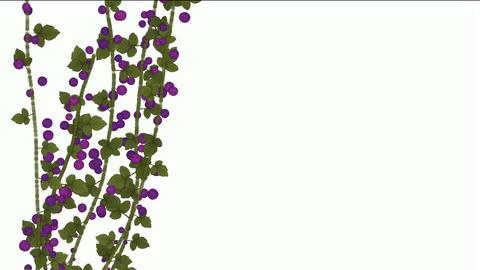 growing berries & leaves Animation