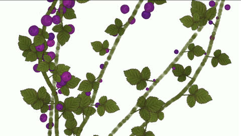 growing berries & leaves Stock Video Footage