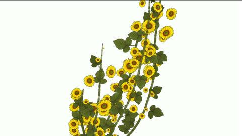 growing yellow daisy & sunflower,spring scene Stock Video Footage