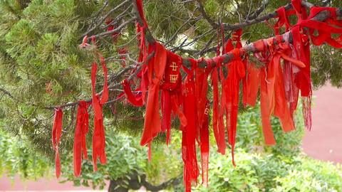 Red ribbon wrapped around branches,lush ginkgo tree in breeze,Trunk,forest,woods Footage