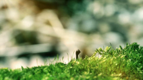 Moss In Spring Forest. Shot With Slider Footage