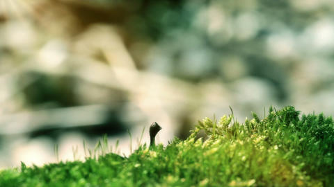 Moss In Spring Forest. Shot With Slider Stock Video Footage