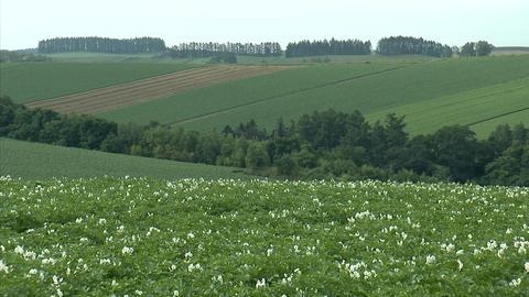 05富良野の農場ジャガイモ畑 Footage