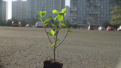 Small tree in the urban environment Footage