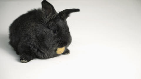 rabbit or bunny on white background Footage
