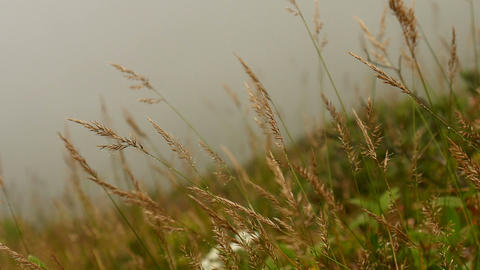 Grass in the wind with fog nature background Footage