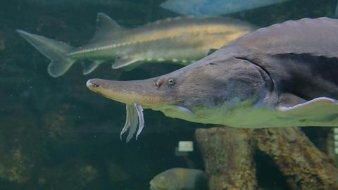 Exotic fishes in aquarium Live Action