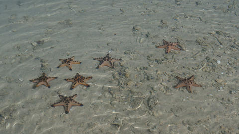 Starfishes in clear water at Honda bay, Philippines Live Action