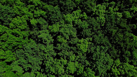 Drone's Eye View - 4K aerial top view of summer green trees in forest background Live Action