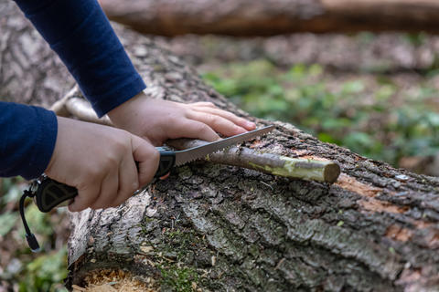 Hands of little girl or boy using a Swiss knife, sawing a piece of wood in the Photo
