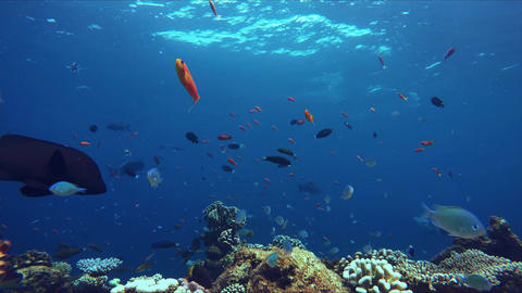 Lively coral reef edge with a lot of colorful fish Footage