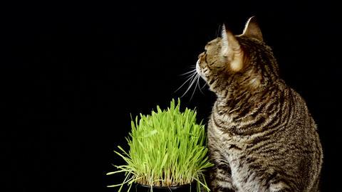 Cat Next To Grass Over Black Background Archivo