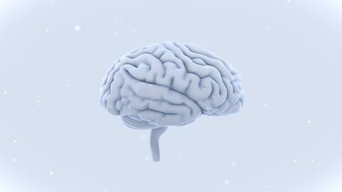 Brain 19 1 A1bW 4k Animation