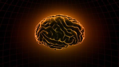 Brain 19 1 B1dD 4k Animation