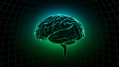Brain 19 1 C1dD 4k Animation