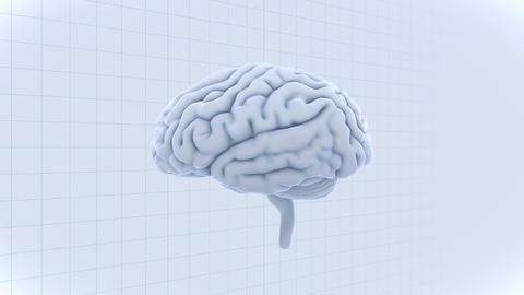 Brain 19 1 C1gW 4k Animation