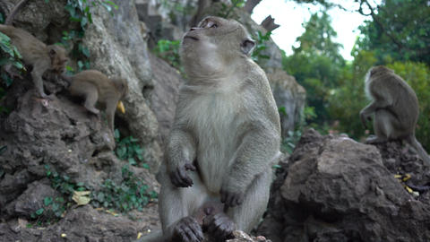 portrait of a monkey close-up outdoors Footage