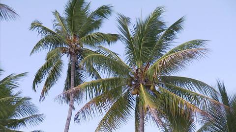 011 Coconut Footage