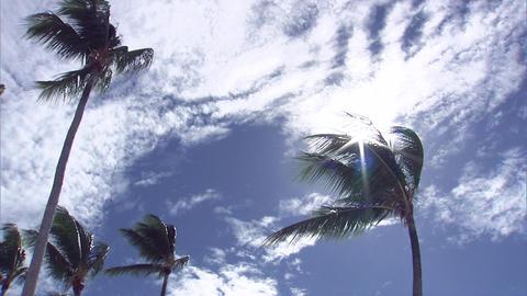 015 Coconut Footage