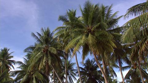 017 Coconut ビデオ