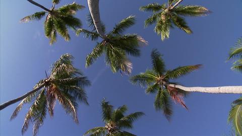 027 Coconut Footage