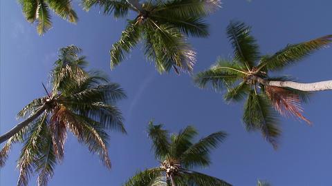 028 Coconut Footage