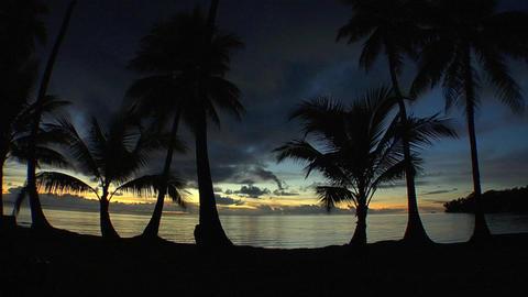 037 Coconut Footage