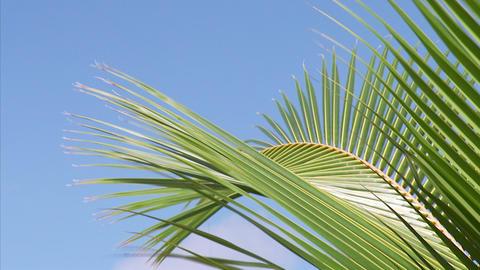 048 Coconut Footage