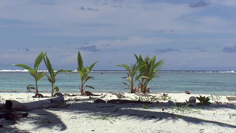 058 Coconut Footage
