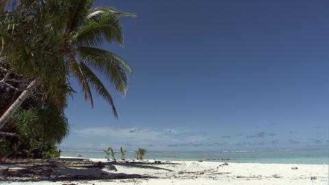 061 Coconut Footage