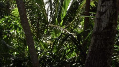 063 Coconut Footage