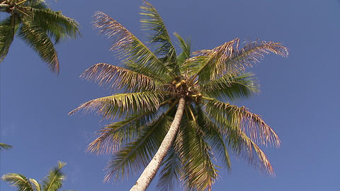 105 Coconut TEM 07 Footage