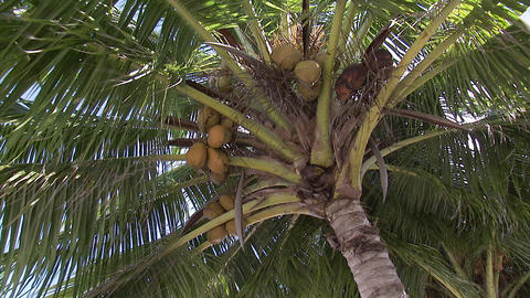 109 Coconut TEM 11 Footage