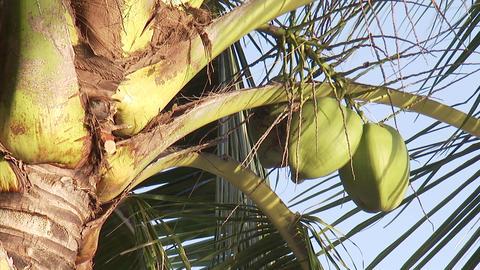 114 Coconut TEM 16 ビデオ
