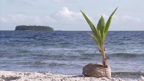 116 Coconut TEM 18 Footage