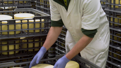 Cheese maker holding cheese wheel at the cheese storage during the aging process ライブ動画