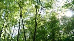 Panorama in the forest Footage