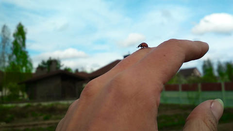 Ladybug creeping by the hand Archivo