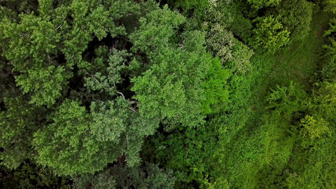 Drone's Eye View - 4K top down view of woodland mysterious forest trees Footage