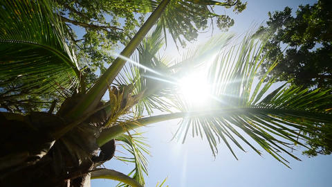 Palm tree by the sea in La Datcha beach in Guadeloupe. French west indies, Caribbean sea Footage