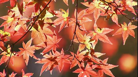 002東京公園07 Footage