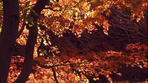 99東京公園09 Footage