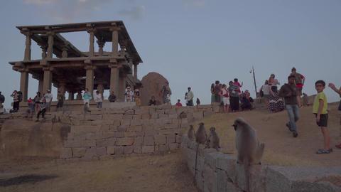 [alt video] Tourists meet the sunset with monkeys