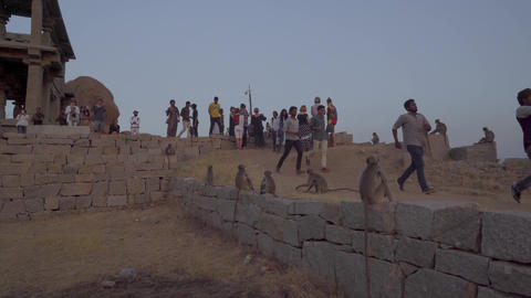 Tourists meet the sunset with monkeys GIF