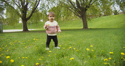 [alt video] Cute baby girl playing with dandelions in the park