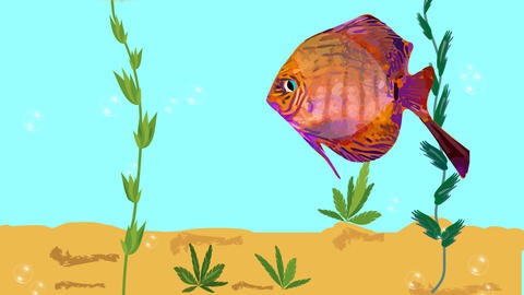 Red fish floating in aquarium with green plants, air bubbles. Animated Videos animados
