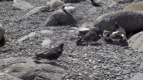 Pigeons Eating On The Beach GIF